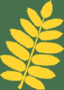 European mountain ash leaf silhouette