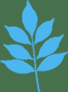 Modesto ash leaf - векторний силует
