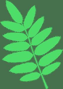American mountain ash leaf - Векторный Силуэт