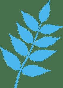 Common ash leaf - Векторный Силуэт