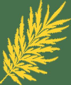 Silky oak leaf silhouette