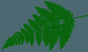 Fern Leaf silhouette