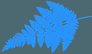 Liść paproci - sylwetka wektorowa