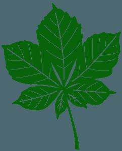 Kastanjeblad vector silhouet
