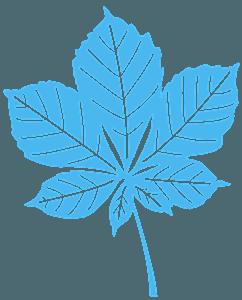 Kastanienblatt vektor silhouette