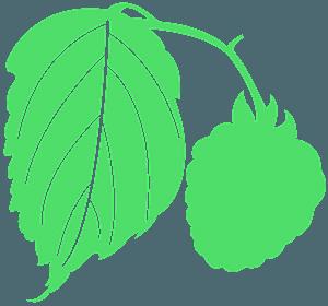 Himbeere vektor silhouette