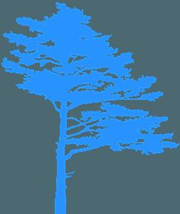 Mäntypuu siluetti