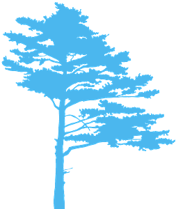 Kieferbaum vektor silhouette