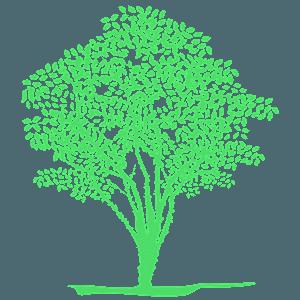 Jabuticaba tree silhouette
