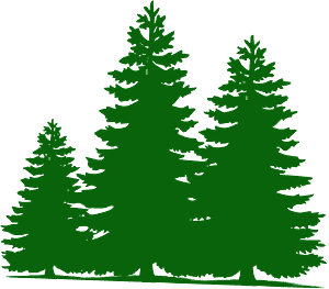 Pine trees silhouette