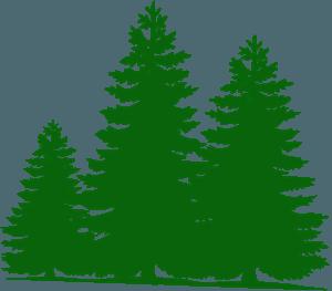Pine trees的剪影