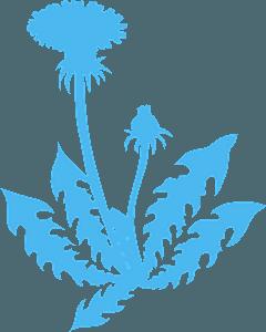 Dandelion siluetti