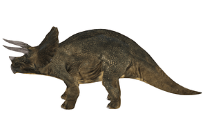 Triceratops 3D-model