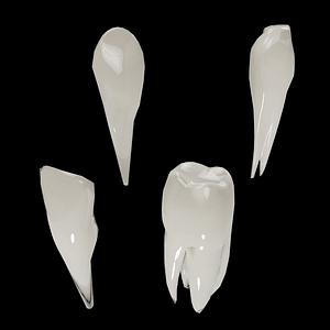 Set of Teeth 3D Model
