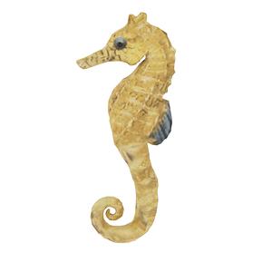 Hippocampe modèle 3D