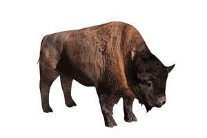 Modello 3D di Bisonte