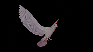 Animated pigeon 3D Model