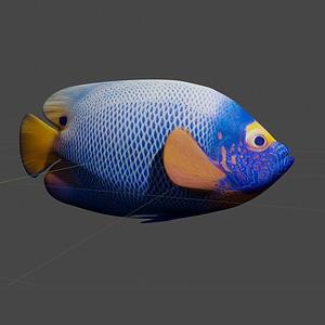 Tropical angelfish 3D Model