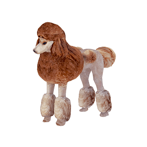 Poodle 3D-malli