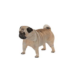 Pug 3D-malli