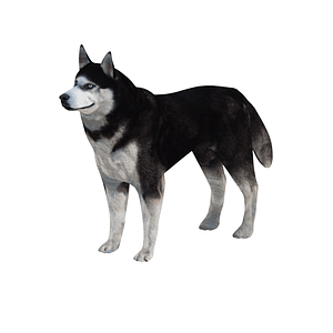 Siberian Husky 3D-malli