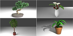 Plants in Pots 3D Model
