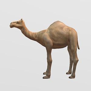 Kamel 3D-Modell