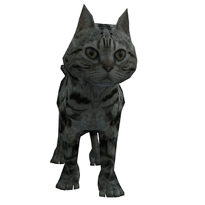 American Shorthair Cat 3D Model