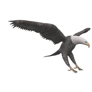 Eagle 3D Model