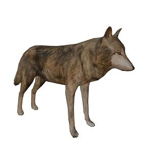 Wolf 3D-Modell