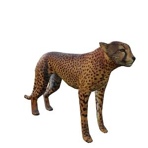Gepard 3D-Modell