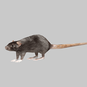 Ratte 3D-Modell