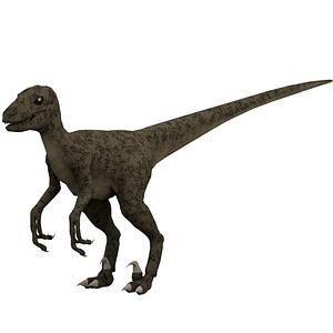 Velociraptor 3D Model