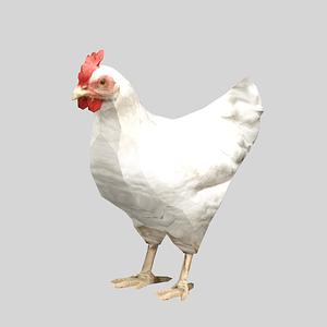 Chicken 3D Model