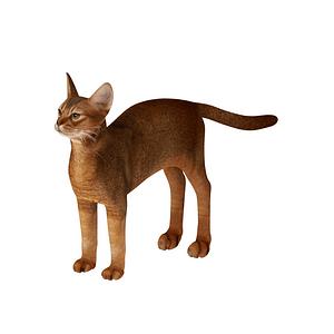 아비시니안 고양이 3D 모델