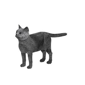 브리티시 쇼트헤어 3D 모델