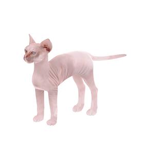 스핑크스 고양이 3D 모델