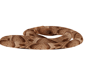 Agkistrodon contortrix 3D-malli