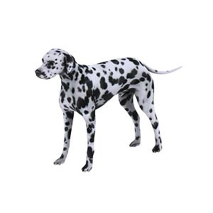Dalmatiankoira 3D-malli