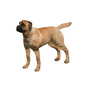Mastiffi 3D-malli