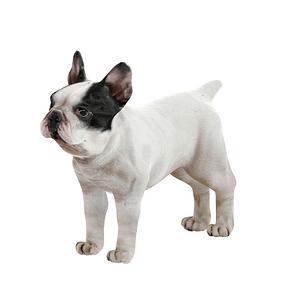 Ranskanbuldoggi 3D-malli