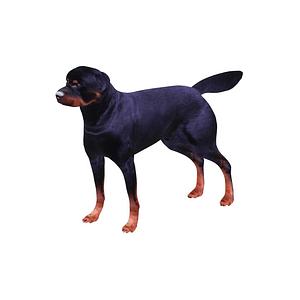Rottweiler 3D-malli