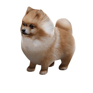 Pomeranian 3D-malli