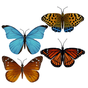 Set of Butterflies 3D Model