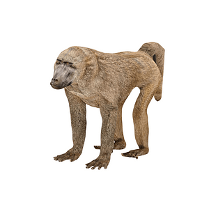 Modelo 3D de Baboon