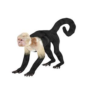 Modelo 3D de Capuchin