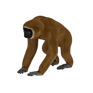 Modelo 3D de Gibbon