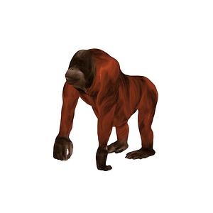 Modelo 3D de Orangutan