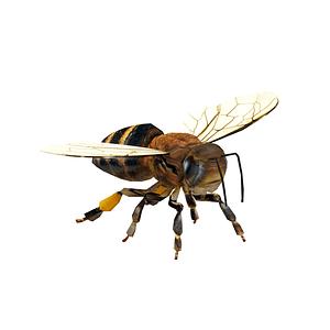 Biene 3D-Modell