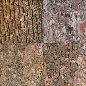 Tree Bark Textures 3D Model